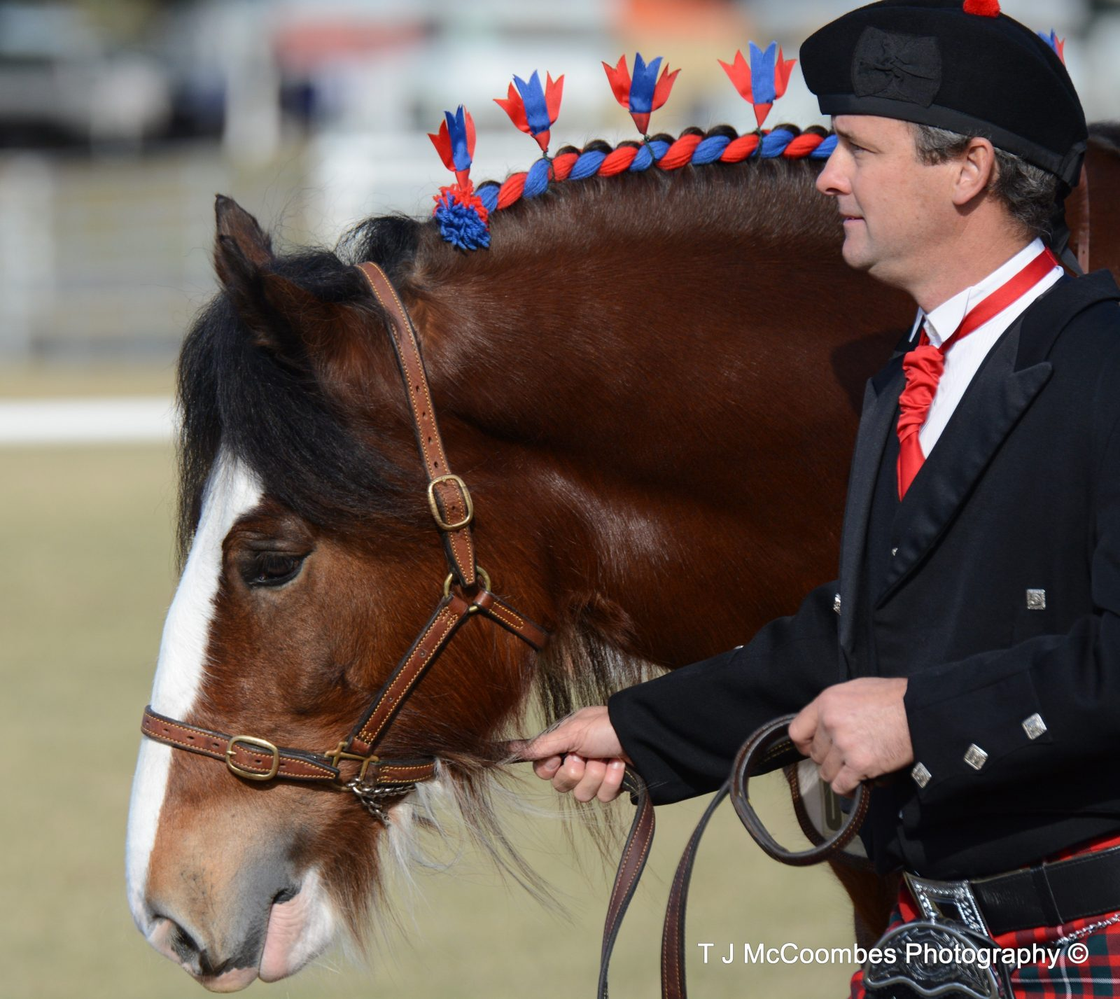 Clydesdale Horse at the Clydie Spectacular