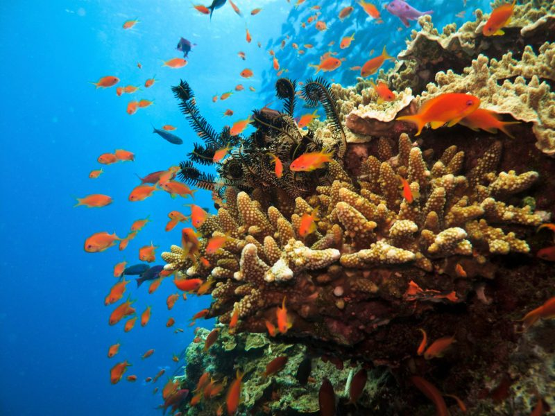 Close up of coral, fish and other colourful marine life