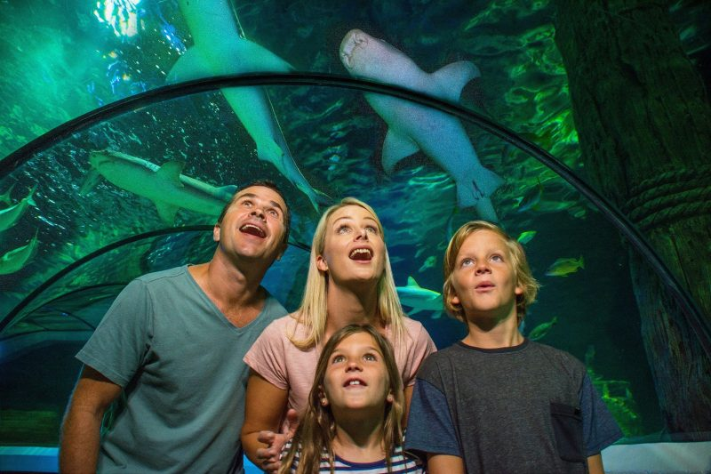 Ocean Tunnel Sharks