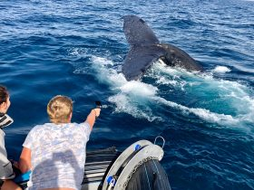 Whale Watching Adventures Gold Coast