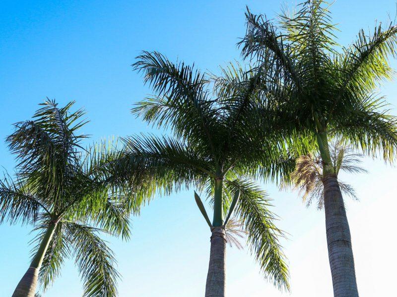 Secura Lifestyle Dreamtime Coomera Park Surrounds