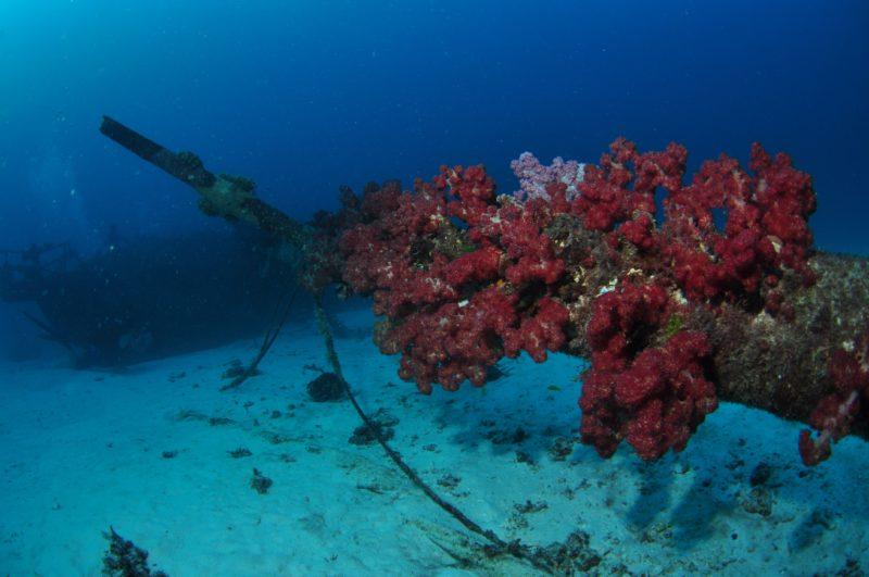 Severance Shipwreck