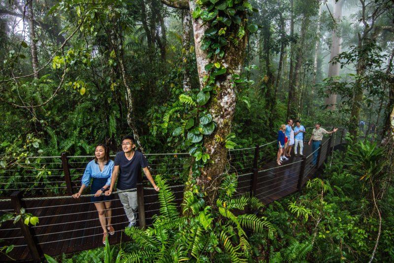 Red Peak Rainforest Station