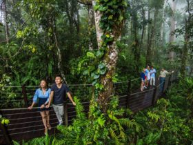 Red Peak Rainforest Station