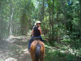 Enjoy a family trail ride
