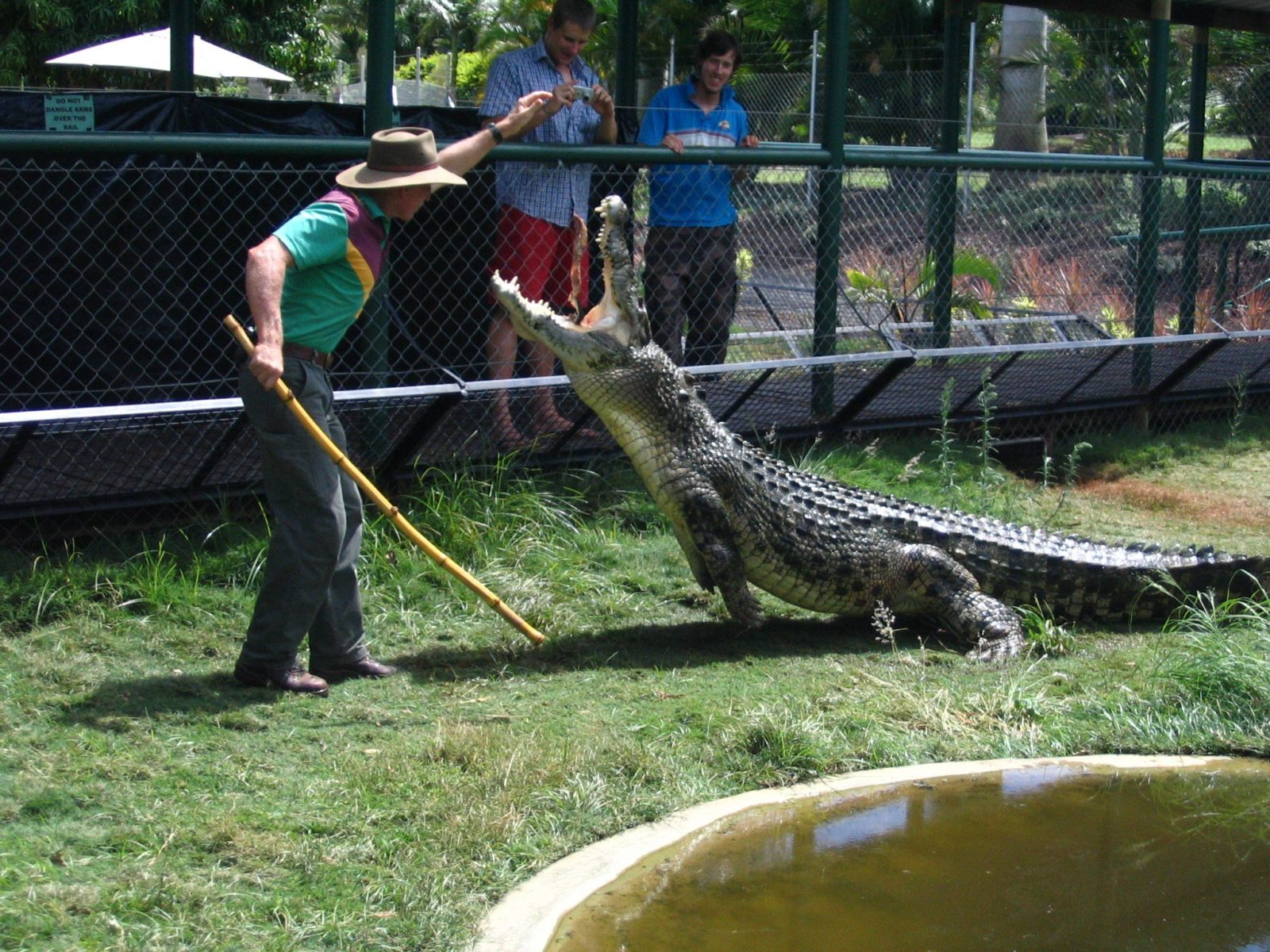 Daily Croc Feeding 12.30pm