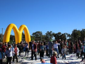 Crowds will enjoy the snowfield at Snowflakes in Stanthorpe