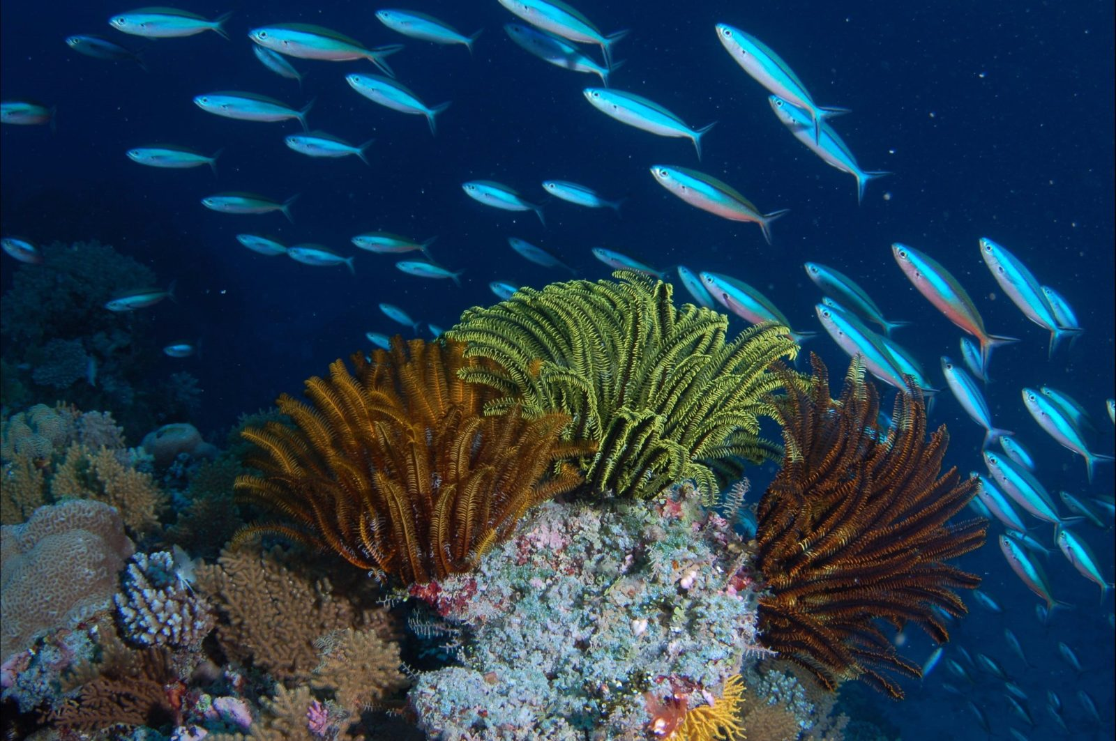 Southern Small Detached Reef