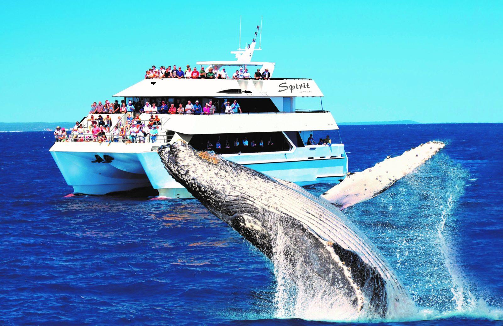Spirit Of Hervey Bay Whale Watching Cruises