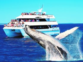 Spirit Of Hervey Bay Whale Watching Cruises