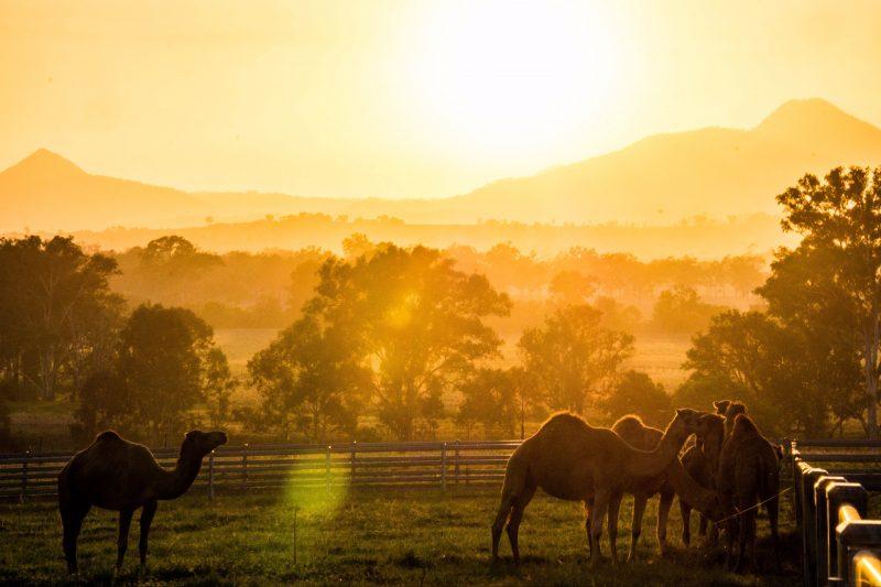 Sun setting over the Scenic Rim at Summer Land Camel Farm