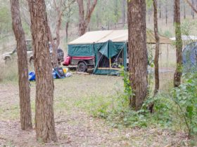Camper trailer and 4WD set up under trees.