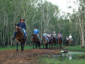 Riders coming through the Australian bush