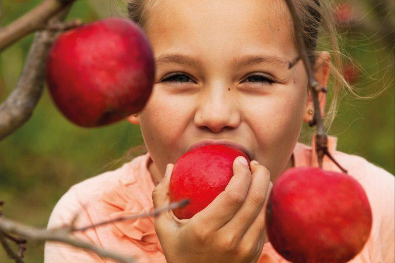 Enjoy Fresh apples