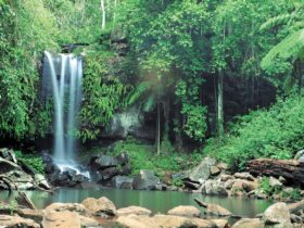 Waterfalls cascading into pool, Tamborine National Park