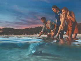 Feed Wild Dolphins at Tangalooma Island Resort. Official guests of the resort only. Conditions apply