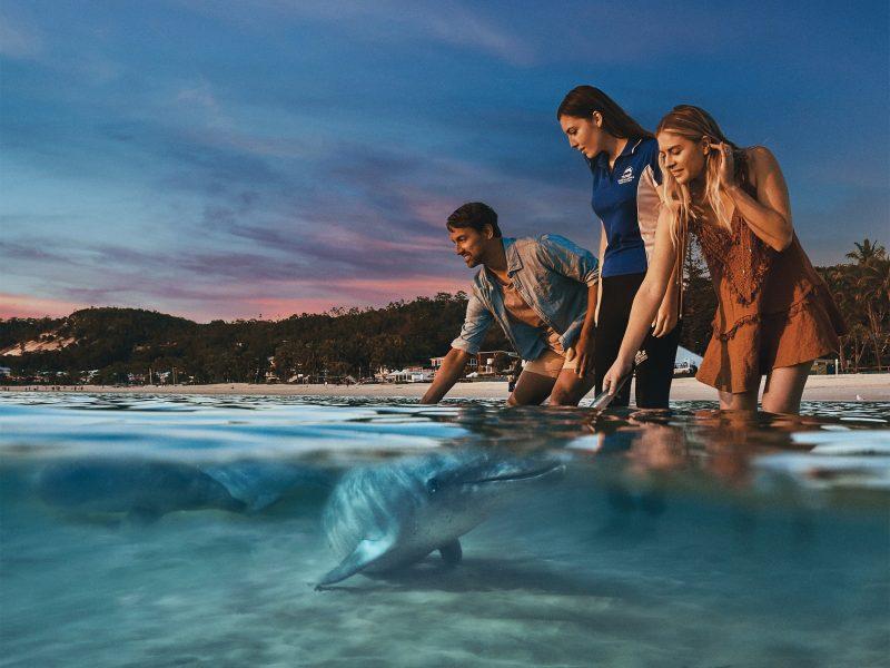 Tangalooma Island Resort - Wild Dolphin Feeding