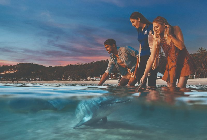 Feed Wild Dolphins - Exclusive to Guests of Tangalooma Island Resort. Conditions apply.
