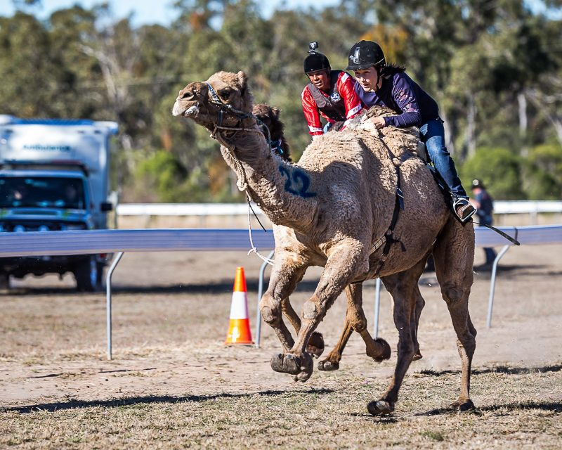 Camel Races at Tara Festival