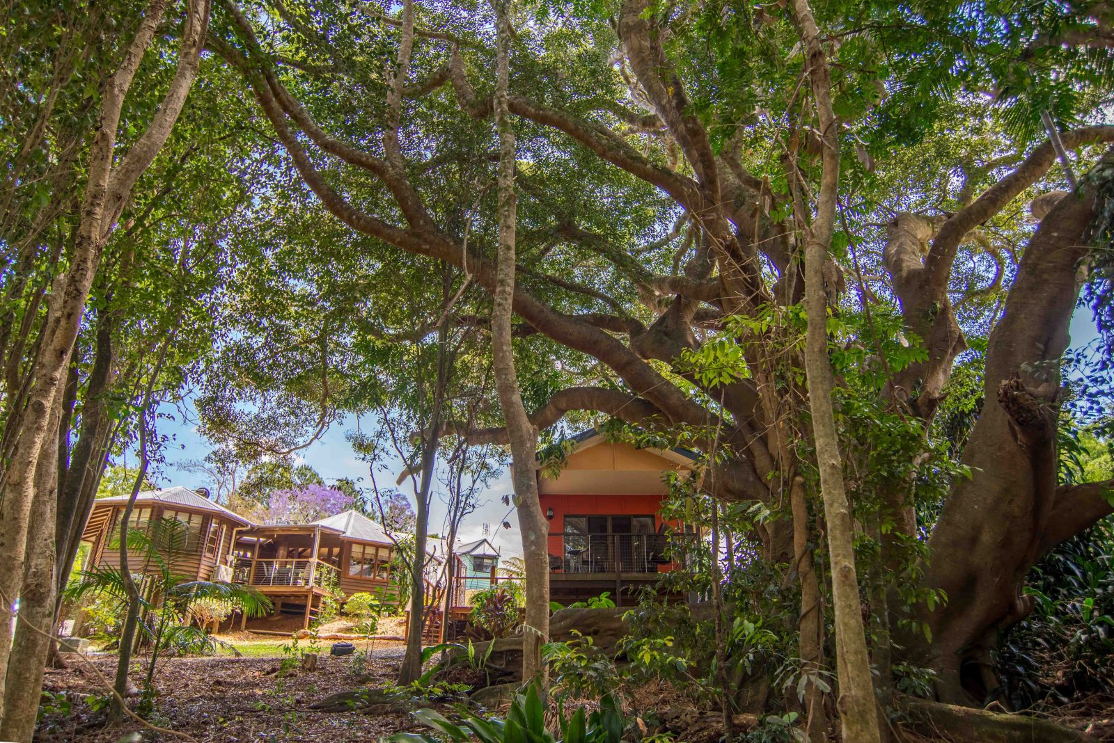 Exterior photo of the rainforest cottage within The African Village - by Clouds in Maleny