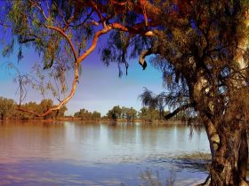 The Lake Quilpie