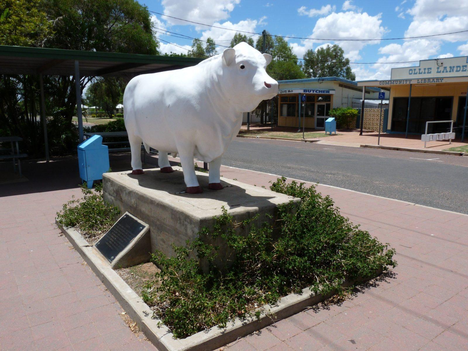 Aramac - The White Bull