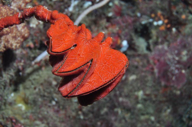 Thetford Reef