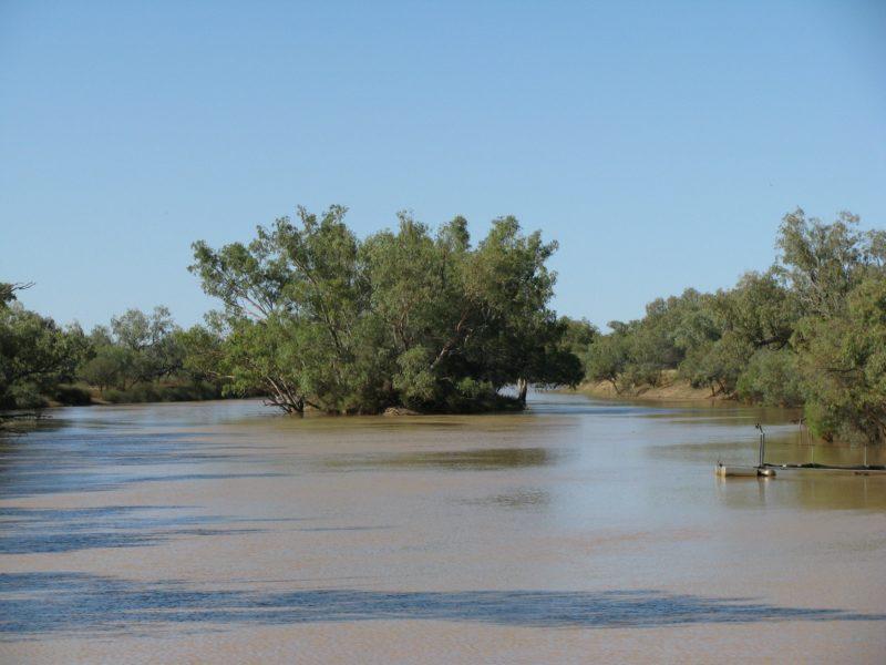 The Thomson River Island at Jundah in far western Queensland