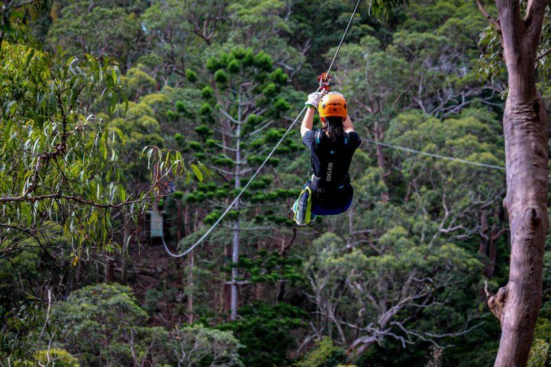 Treetop Challenge - Canyon Flier