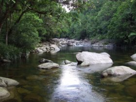 Mossman Gorge Tony's Tropical Tours