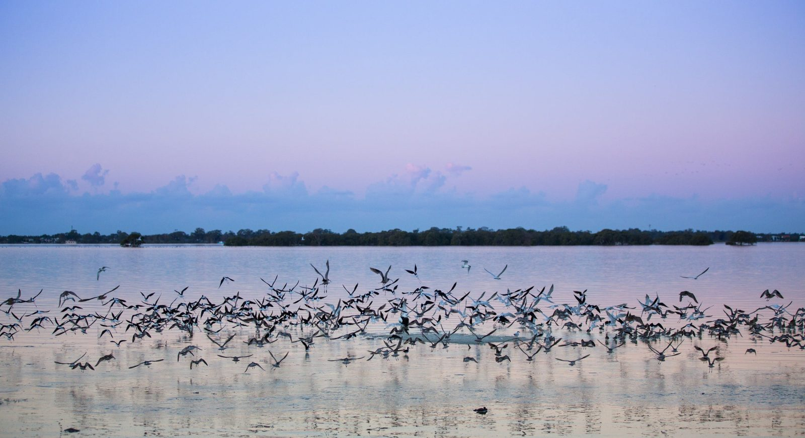 Toorbul Beach Birds on Sunset Bribie Island Moreton Bay Region