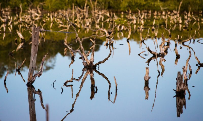 Mangroves_at_Toorbul_beach_near_bribie_island_visit_moreton_bay_region