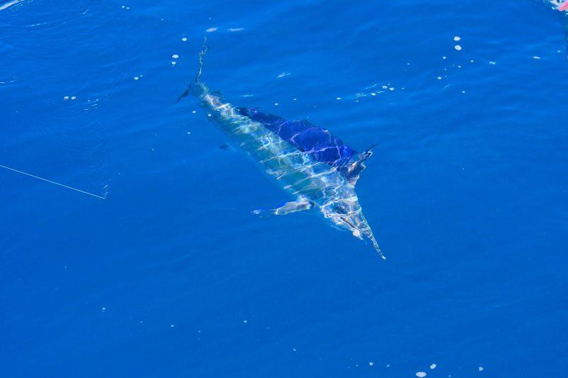 Whitsundays Game Fishing
