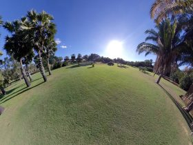 Palmetum main lawn