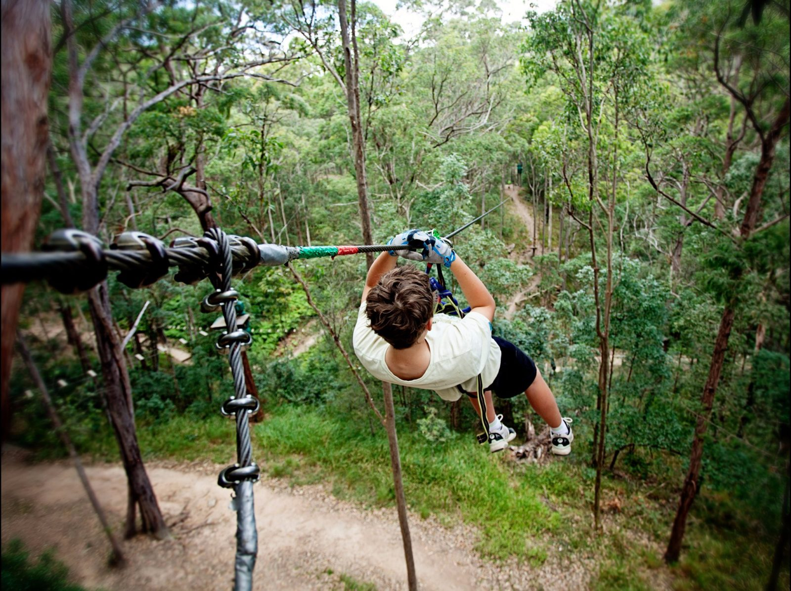 12 huge flying foxes and 100+ TreeTop Challenges