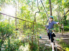 Half a day of TreeTop Climbing