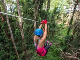 10 Huge ziplines through rainforest