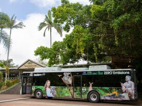 tropic wings 100% electric bus eco tourism kuranda tours