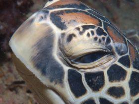 Turtle Bommie
