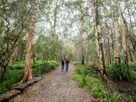 A couple, holding hands and walking along a trail surrounded by trees.