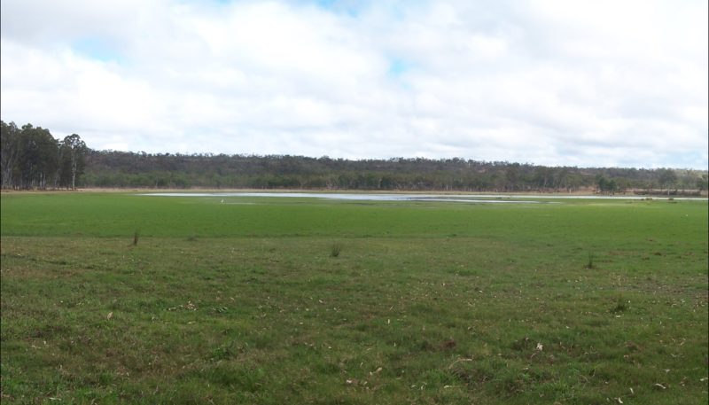 Lake Wairuna surroudned by wetland