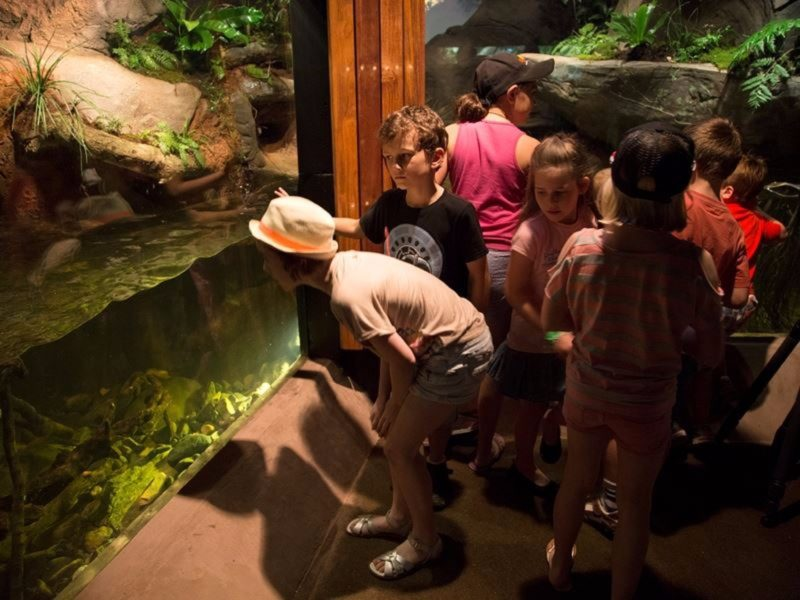 Children looking at platypus tank at Walkabout Creek Wildlife Centre