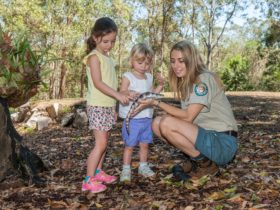 Queensland Parks and Wildlife Ranger showing children a blue-tongued lizard