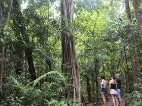 World's oldest living rainforest