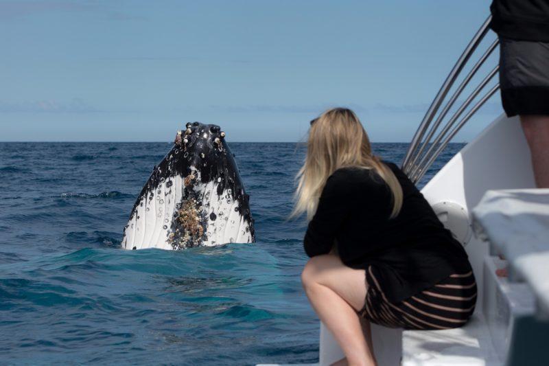 Hervey bay whales 2