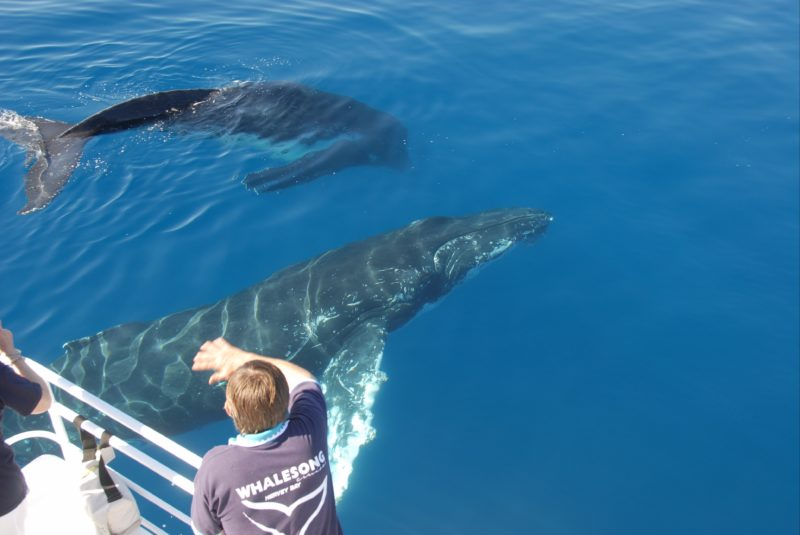 Dave and two whales