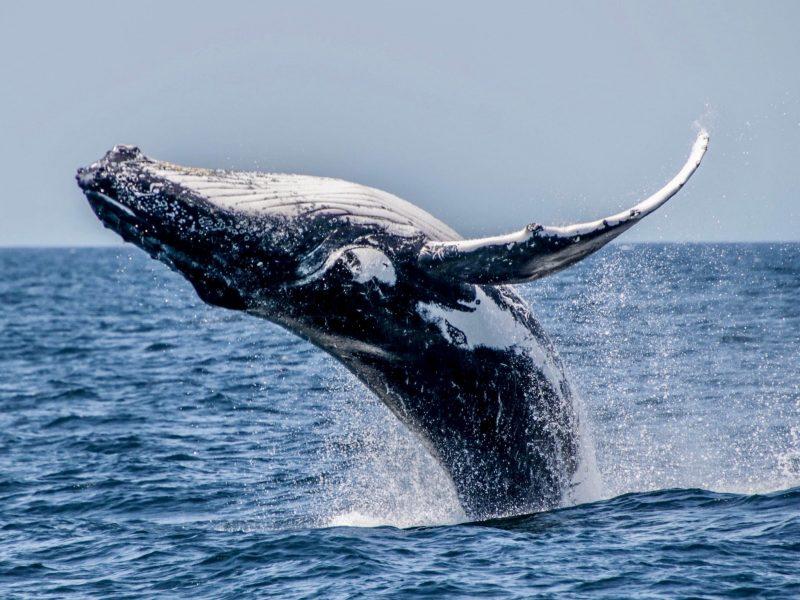 WhalesInParadise