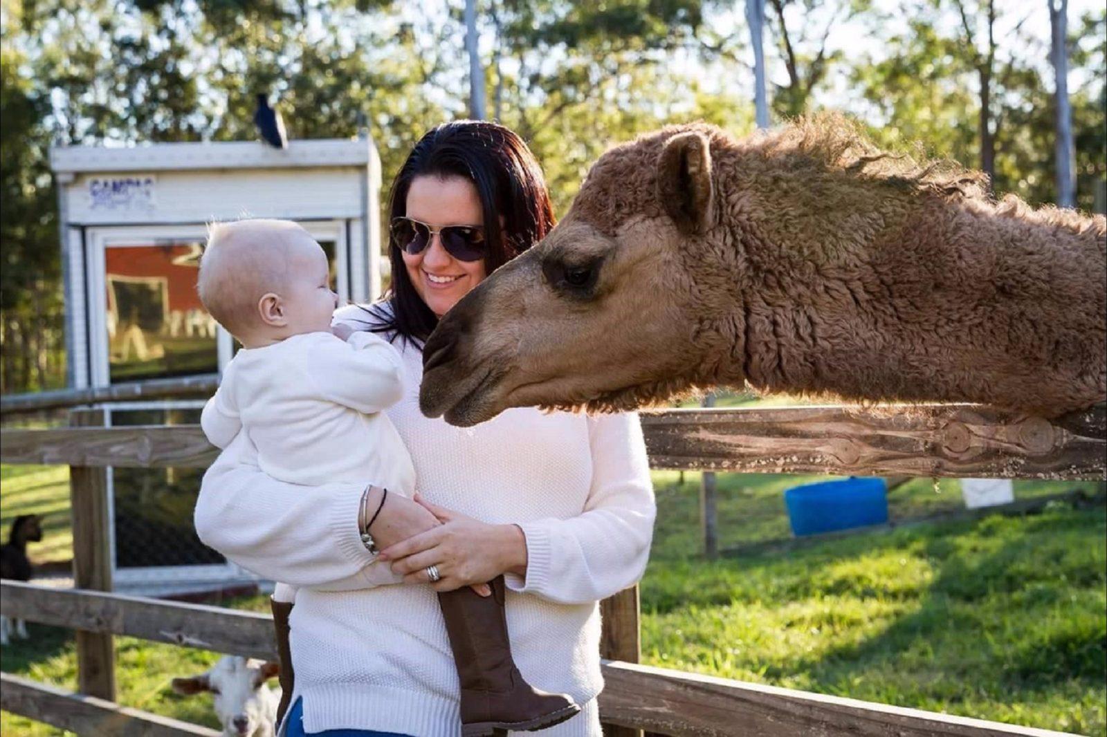 Gypsy the camel