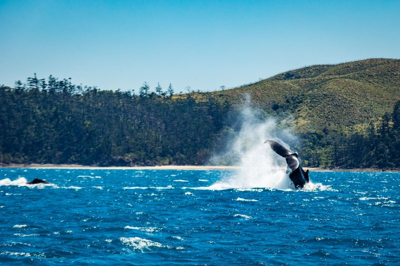 Check out the trail on the Island behind the whale!