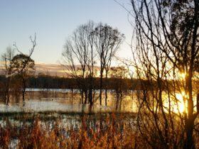 Wooroolin Wetland